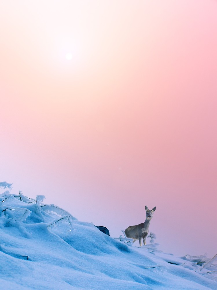 Deer in the snow by Alin Brotea © Shutterstock Inc. All rights reserved.