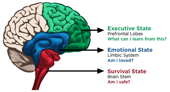 Survival State of Brain